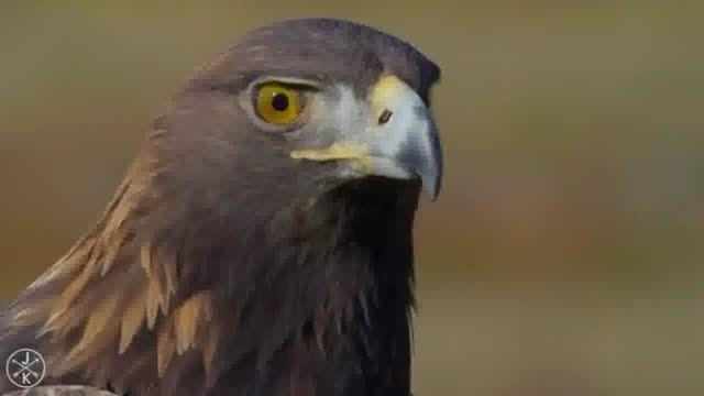 تصاویر بی نظیر از پرندگان