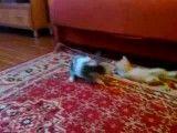 جنگ گربه و خرگوش