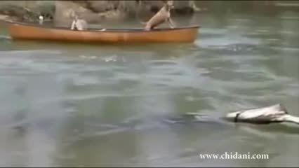 نجات سگها توسط سگ نجات غریق