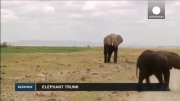 بینی فیل حساس ترین شامه دنیا