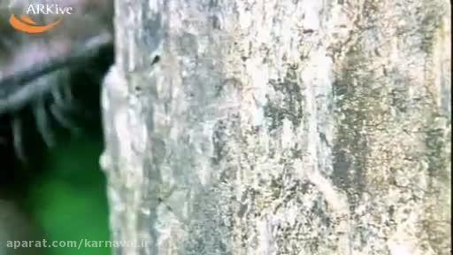 کارناوال | آی آی