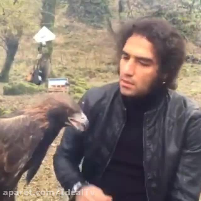 رضا یزدانی و غذا دادن به عقاب