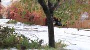 زمستان زیبا حیف که به طبیعت صدمه زده!