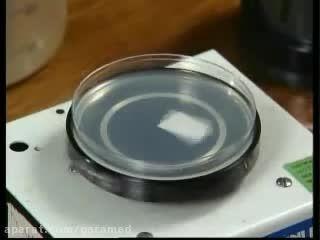 آزمایش تعیین حساسیت میکروبی