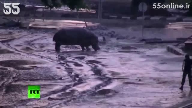 فرار حیوانات وحشی از باغ وحش تفلیس پس از وقوع سیل