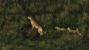 تصاویر هوایی از حیوانات