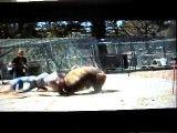 حمله مرگبار خرس به انسان
