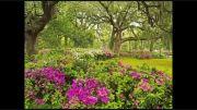 بهار تابستان پاییز زمستان و دوباره بهار