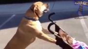 پیاده روی بچه ها با سگ ها (جدید)