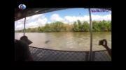 حمله کروکودیل به قایق گردشگران