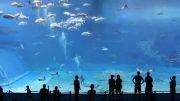 بزرگترین آکواریوم کشور ژاپن ...!