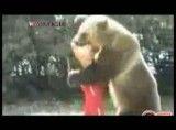 کشتی گرفتن خرس با انسان