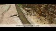 ردپای دایناسور در کویر ایران