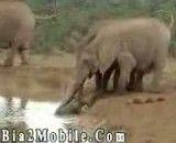 نجات بچه فیل