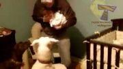 عاطفه گربه و سگ برای دیدن اولین نوزاد انسان