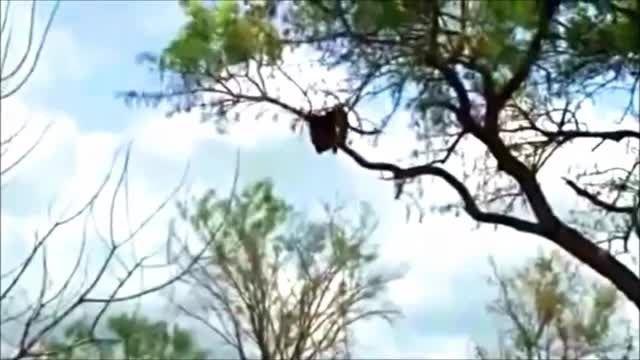 شغال عقاب را پلنگ شغال را وشیرها پلنگ را می کشندو......