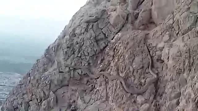 مار عظیم در کوه صفه اصفهان -20 شهریور 1394