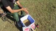آموزش صید و ماهیگیری کپور - مواد اولیه و مراحل تهیه طعمه مید
