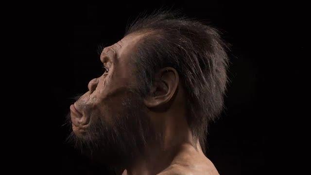 homo nalediُ گونه ای جدید از خویشاوندان انسان
