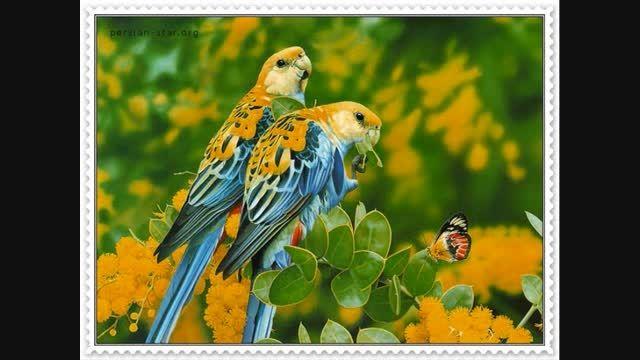 تصاویری از پرنده
