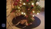 گربه vs درخت کریسمس.ته خنده :)))