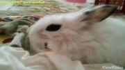 خرگوش بامزه خانگی