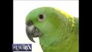 طوطیها چطور حرف می زنند؟؟