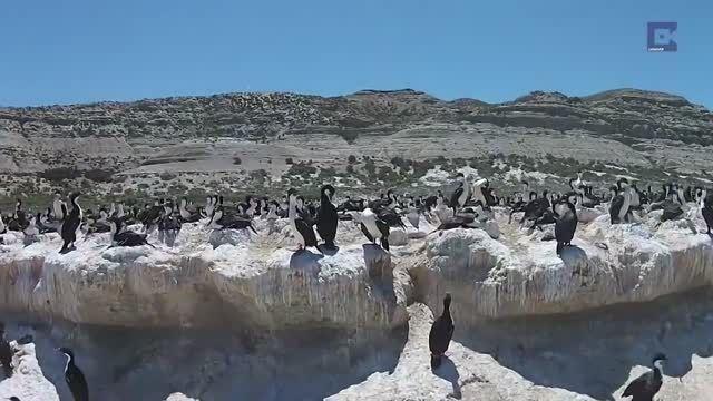 گردهمایی بزرگ مرغان دریایی