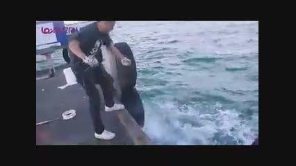 صید ماهی تن بدون تور و چوب ماهی گیری+فیلم کلیپ ویدیو
