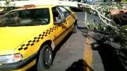 وقت نیوز-افتادن شاخه درخت روی تاکسی در تبریز