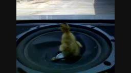 اردک بیچاره از پوپوپور