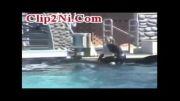 نمایش دیدنی دختر با نهنگ قاتل