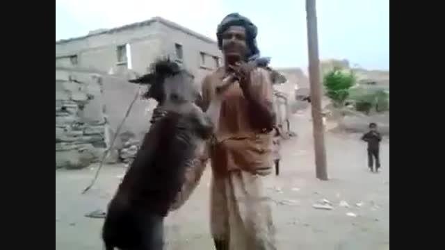 رقص باله با الاغ