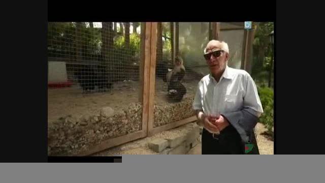 خندوانه - رضا بنفشه خواه - باغ پرندگان b