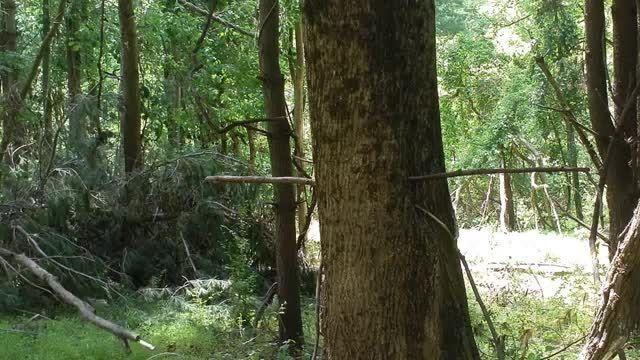 تکه کردن چوب با استفاده از شاخه های تنومند درختان