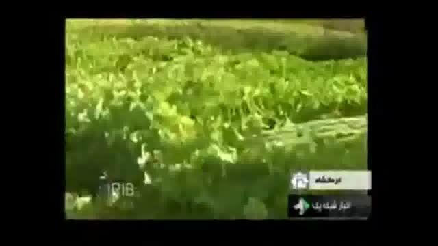 خیار ۳۵ کیلویی در کرمانشاه