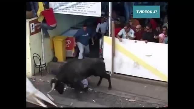 صحنه های درگیری انسان با گاو!