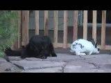 گربه و خرگوش یه کار می کنن