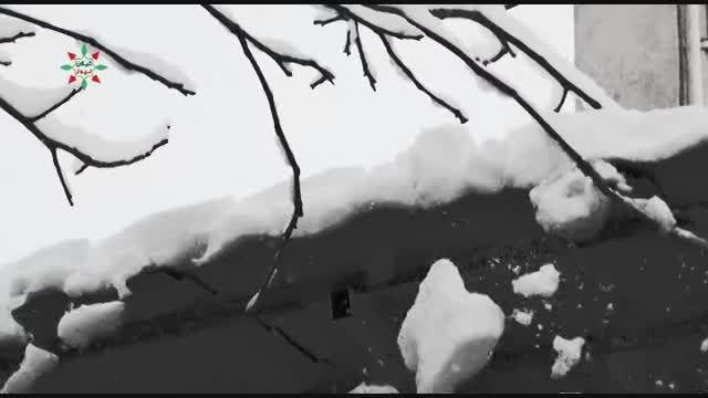 کیلان؛ ۱۱ روز مانده تا بهار سفیدپوش شد