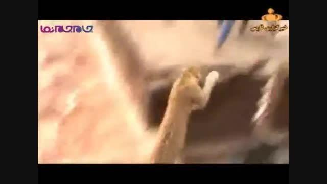 حمله پلنگ به شهروندان