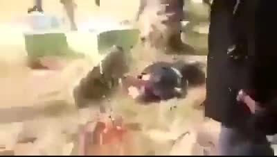 عاقبت سلفی(534)-سوریه-عراق-داعش