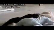 کشتی گرفتن بچه با گربه !!