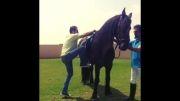 اسب سواری بهرام رادان
