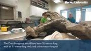 کشف اسکلت دایناسور 26 متری در آرژانتین