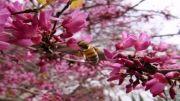 تصاویر بهاره باغ ارم شیراز