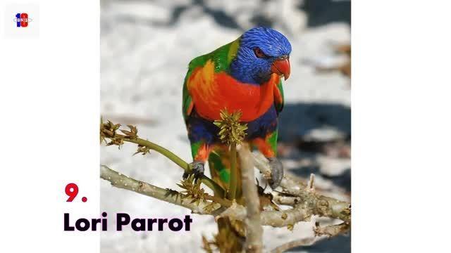 10 زیباترین پرنده جهان را ببینید