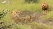 یک خانواده خوشبخت...