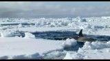 نهنگ های قاتل
