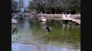 تصویری از پرندگان در باغ پرندگان ، پارک دلفین ها در کیش