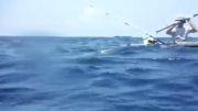 حمله کوسه سرچکشی به ماهیگیران